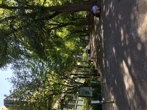 大学構内の公園